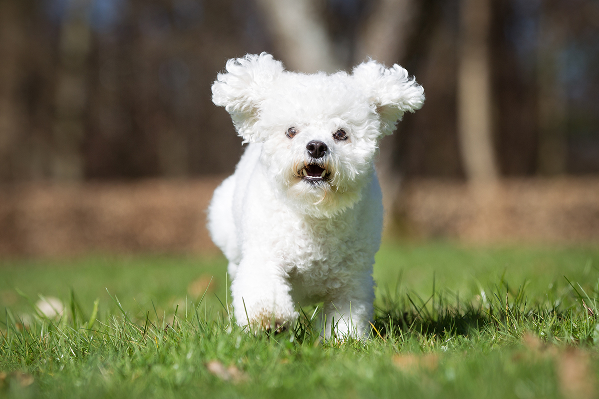 Uses For Pet Medication Rimadyl Petmeds 174 Pet Health Blog