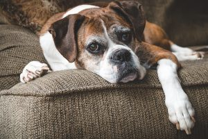 Helping senior pets with pet stairs and ramps