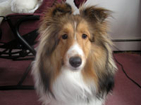 PetMeds® Tips on Reducing Your Dog's Shedding