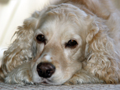 PetMeds® Diagnosing Pets with Chronic Ear Infections