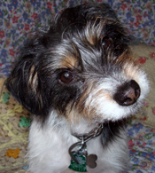 PetMeds® Remedies for Dog Ear Infections