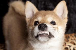 Can Pets Get Cavities?
