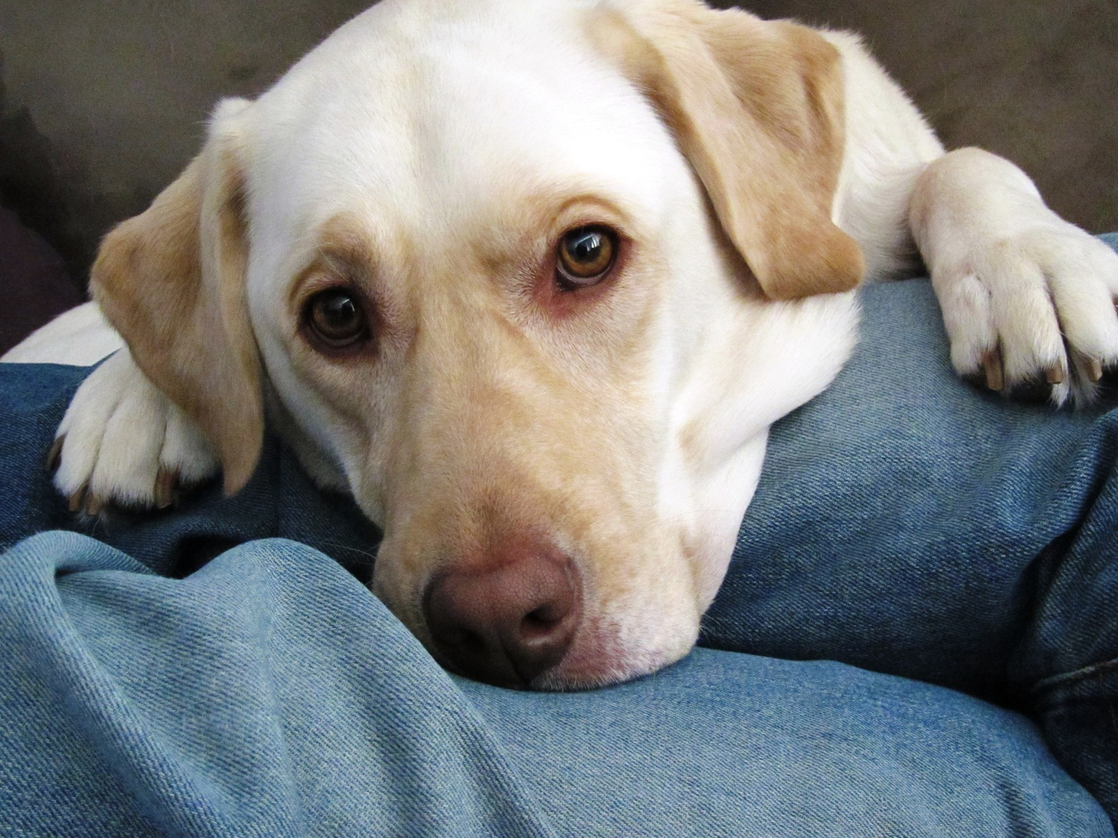 What Does The Vet Vipps Gold Seal Mean Petmeds Pet Health Blog