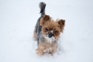 Does my dog need heartworm prevention in the winter?