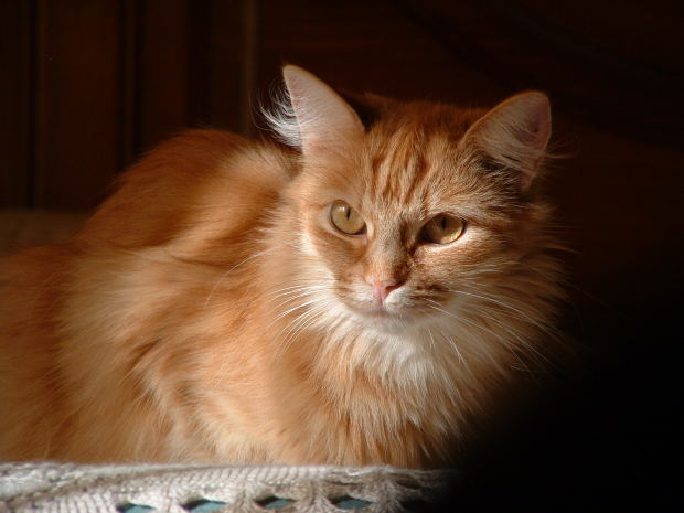Cisapride Use In Cats Petmeds 174 Pet Health Blog