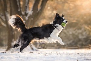 10 tips to boost your pet's health in the new year