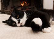 Keep your cat's joints healthy this winter