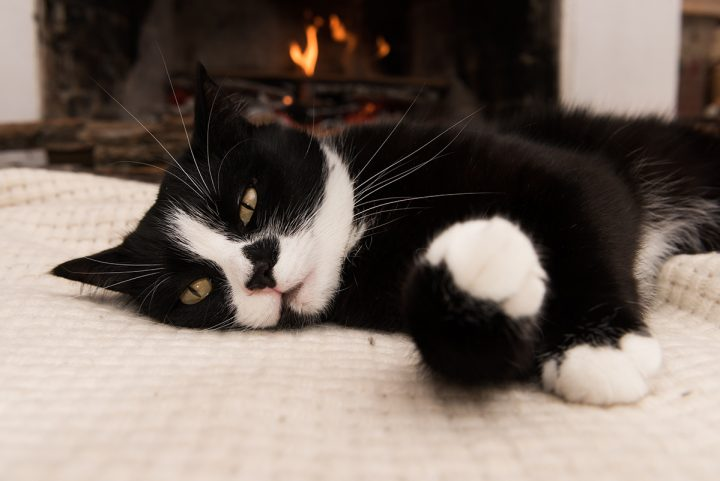 A tuxedo cat warms his joints before a fireplace