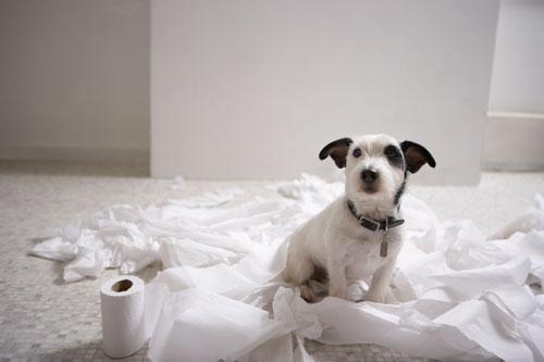 How To Control Dog Shedding Naturally