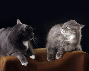 Cats fighting? How to re-establish peace