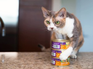 Daisy's plan for the perfect Cat Health Month celebration