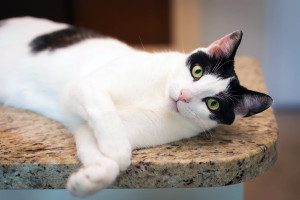 The reasons you will love a shelter cat