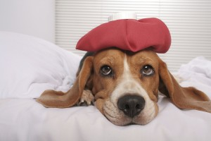 When was the last time your pet had a headache?