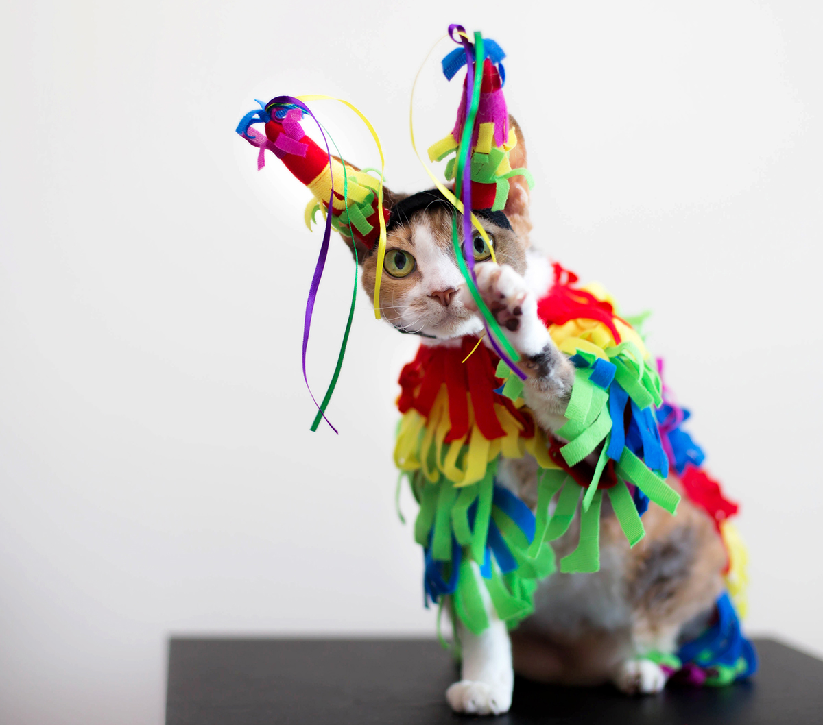daisy is happy with her pinata costume - petmeds® pet health blog