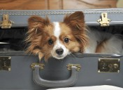 Have a pet? Prepare now for a worry-free vacation