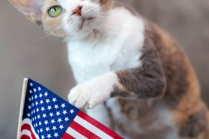 Daisy discovers the true meaning of Veterans Day