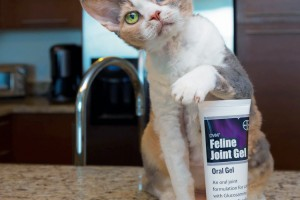 A simple new way to keep your cat active and playful