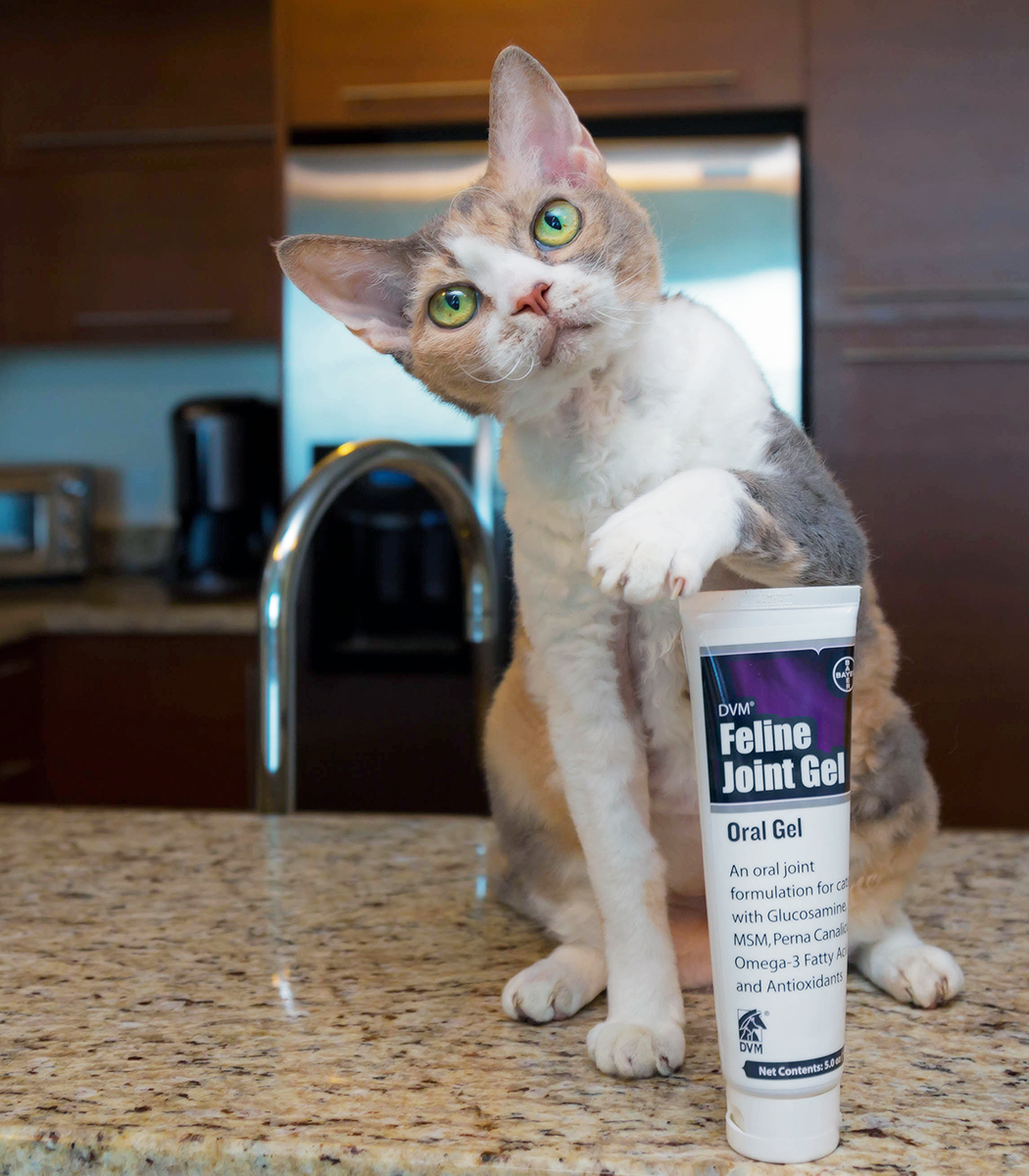 cosequin for cats bladder inflammation cosequin for cats pet joint supplement for cats. Black Bedroom Furniture Sets. Home Design Ideas