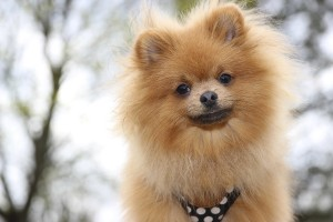 Reducing static electricity in your pet's fur