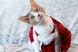"6 ways your pet can get to the top of Santa's ""Nice"" list!"