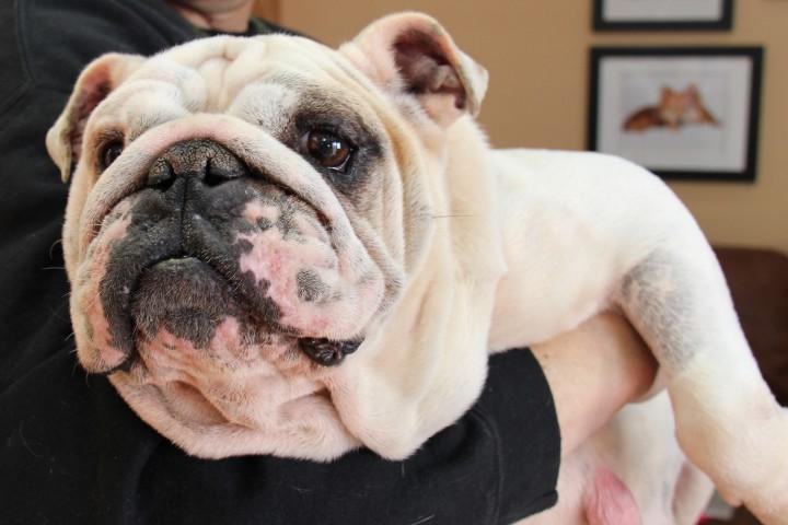 Change a Pet's Life Day: Meet Regina, a former puppy mill breeder