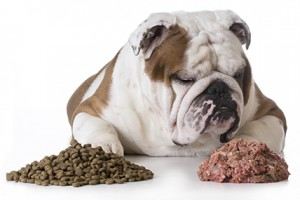 Satisfy your dog's wild side with Carnivore Crunch Freeze-Dried Treats