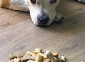 Dog treats: how much is too much?