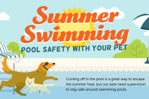 [Illustrated Guide] Summertime pool safety for your pets