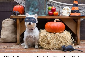 Tips for a safe and pet friendly Halloween night