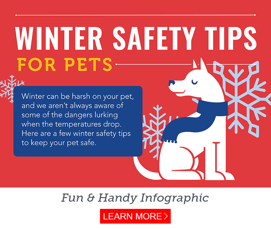 Pet Safety During Winter Weather And Holidays Petmeds