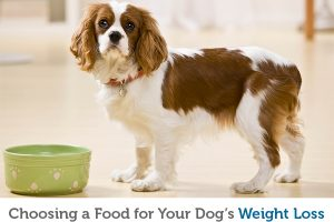 How to select the best food to help your dog lose weight