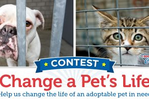 Vote now to change an adoptable pet's life