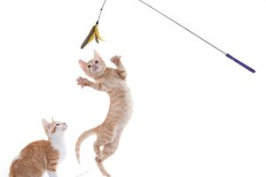 [New Product] Jackson Galaxy Telescoping Wand Cat Toy