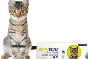 [New Product] Bravecto for Cats