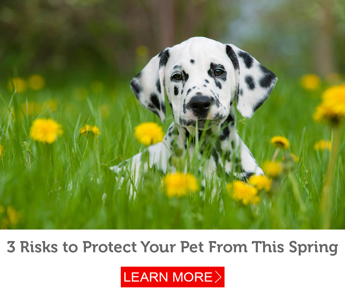 Is Your Pet Protected From These 3 Spring Risks Petmeds