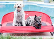 [New Product] Gen7Pets Cool-Air Cot Pet Bed