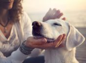 Ask the Vet: The veterinarian's secrets to keeping senior pets healthy