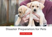 In the event of a disaster, do you have a plan for your pets?