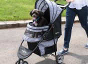[New Product] Gen7Pets Regal Plus Pet Stroller