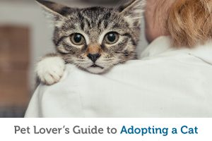 What you need to know before adopting a cuddly new cat