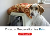 Are you prepared? Your pet depends on you in a disaster