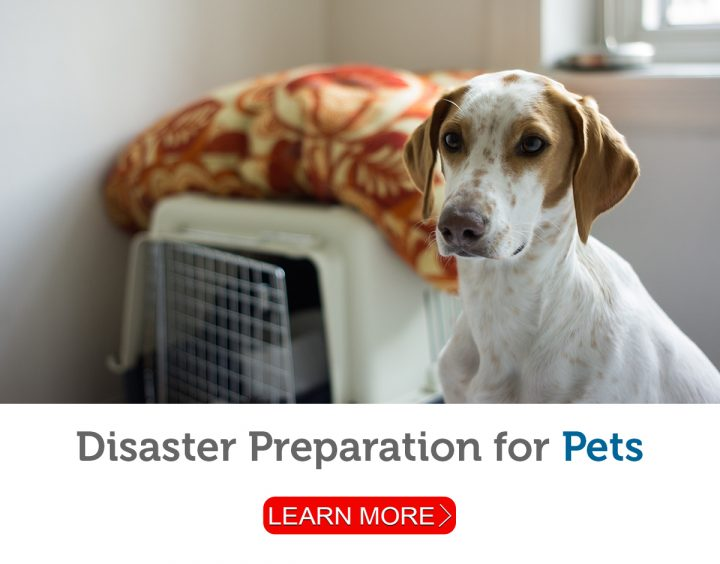 A pet owner prepares a carrier and supplies in case of emergency.