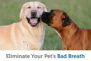 Top 6 causes for bad breath in pets (and how to fix it!)