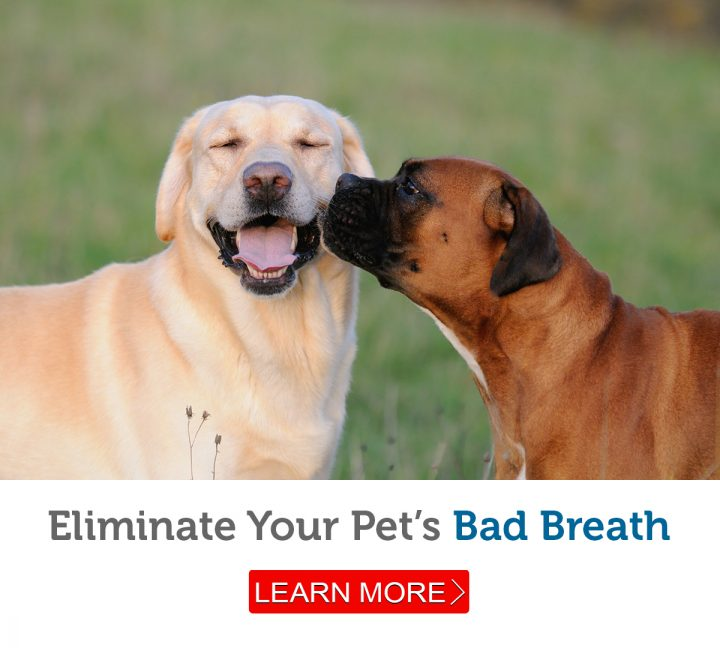 A dog checks for possible bad breath
