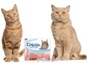 [New Product] Catego for Cats