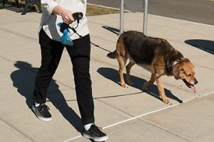 [New Product] Dog Gone Smart I'm Gismo Multi-Function Leash Holder with accessories
