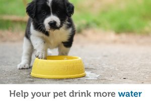 3 easy ways to help your pet drink more water