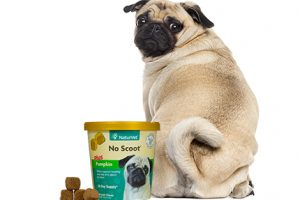[New Product] NaturVet No Scoot Plus Pumpkin Soft Chews for Dogs