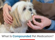 What you need to know about compounded pet medications