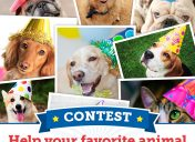 [Contest] Vote now to help less-adoptable shelter pets this DOGust!